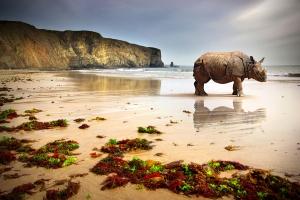Veldt Island Beach Rhinoceros