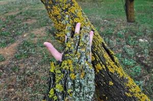 Dryad's Hand