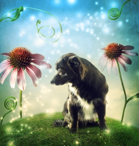 Discover the Go Fer Dog's Magic in Forever Boy