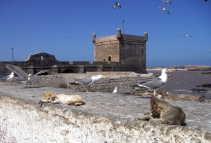 No Hurt Feelings--The Seagulls and Cats Were Great Friends