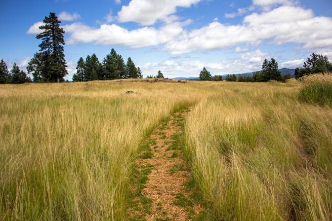 Bestiarum Vocabulum: Grassland Satyr