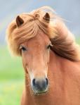 Glitter Pony