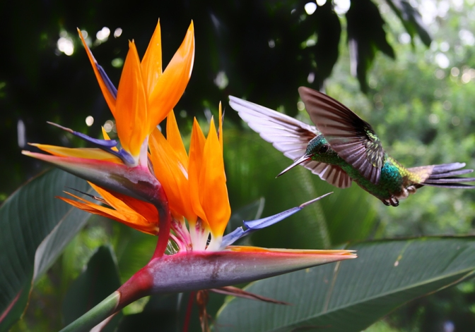Guild Matters Sye: Bird-of-Paradise