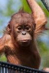 Rig Monkey